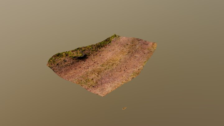 Forest path 3D Model