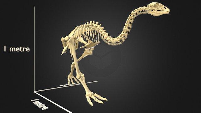 Little bush moa skeleton 3D Model