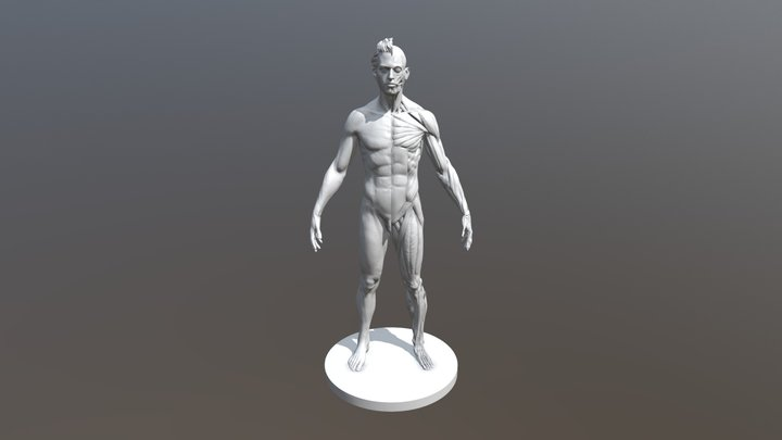 Male Ecorche 3D Model