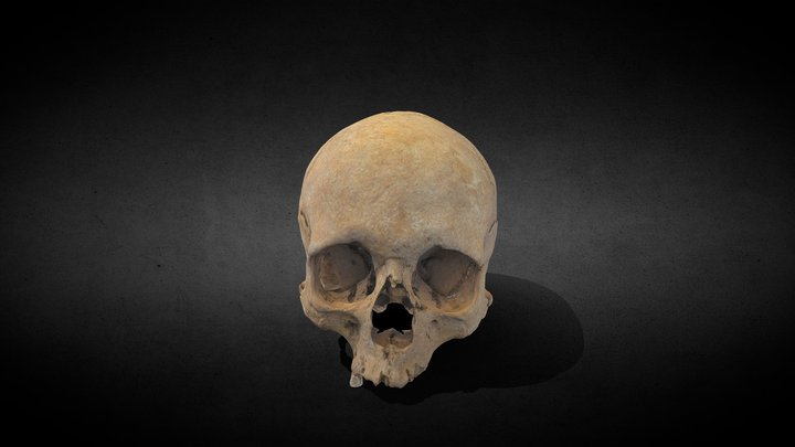 Roman skull 3D Model