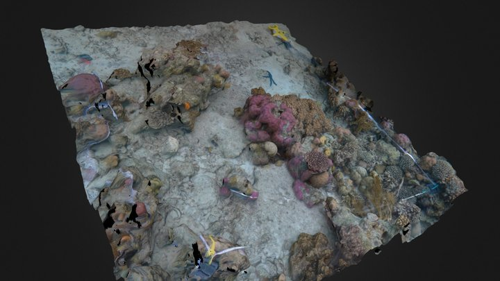 Quadrat (Indonesia) 3D Model