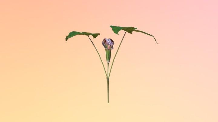 Jack in the Pulpit (Arisaema triphyllum) 3D Model