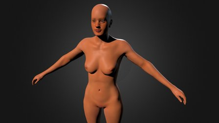 GPF2 Female Anatomy Study 3D Model