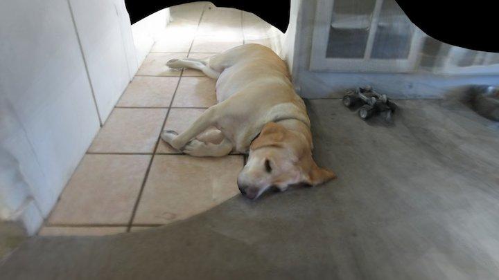 Hoku sleeping 3D Model