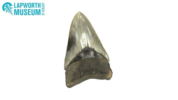 Megalodon fossil shark tooth 3D Model