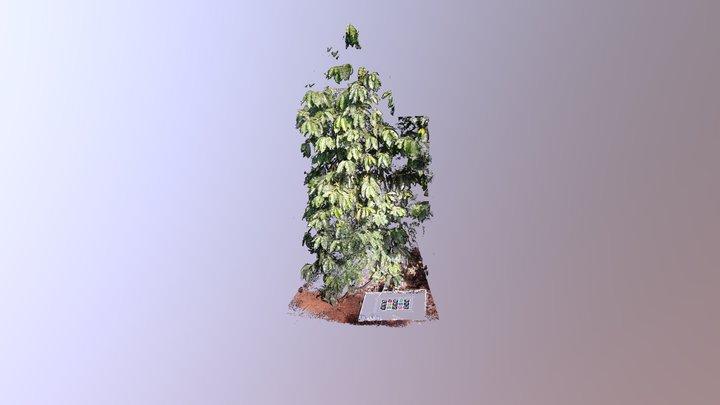 Coffee Plant 13 - 2018-03-20 3D Model