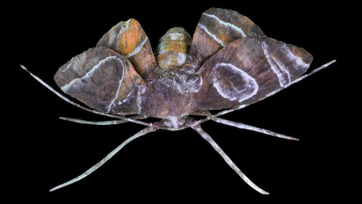 Moth number 1 3D Model