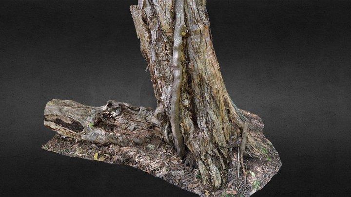 Paperbark (melaleuca) Trunk and Strangler Fig. 3D Model