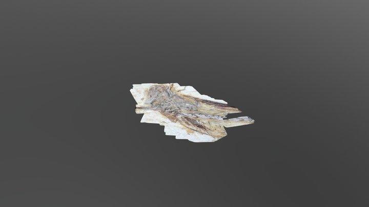 Beipiaosaurus skull 3D Model