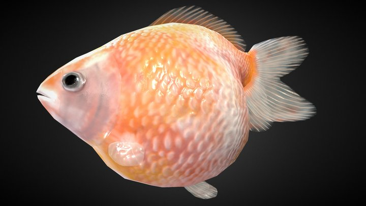 Fantail Pearlscale Rigged 3D Model