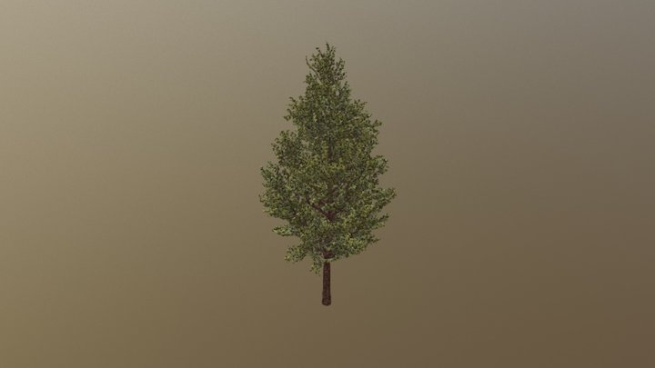 SM Tree Nature With Leaf 3D Model