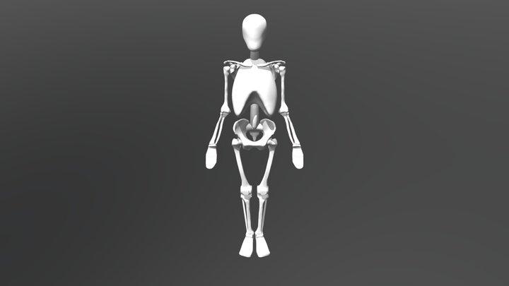 Richer Skeleton Simplified 3D Model