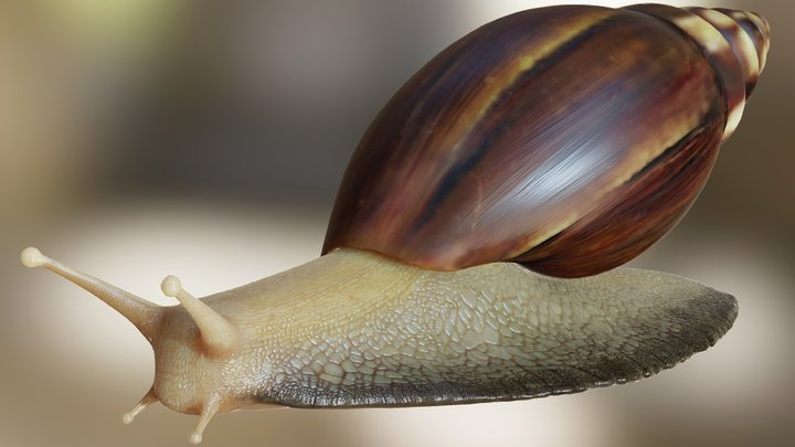 Snail PhotoRealistic 3D Model