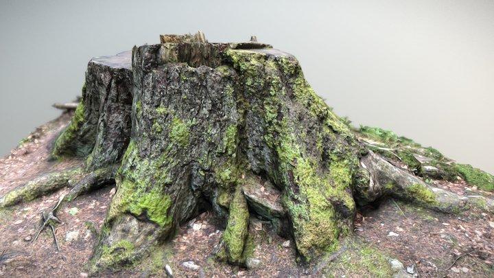 Boubín Stump 3D Model