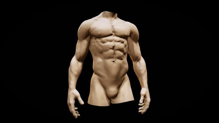Torso anatomy basemesh2 3D Model