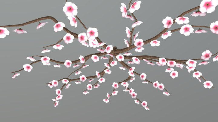 Cherry Tree13 Stage3 3D Model