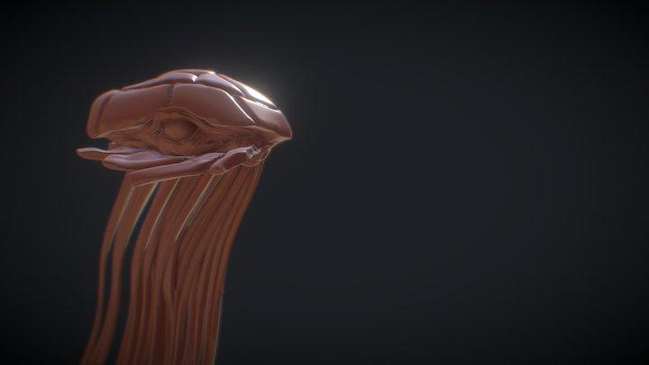 Santhid Sculpt 3D Model