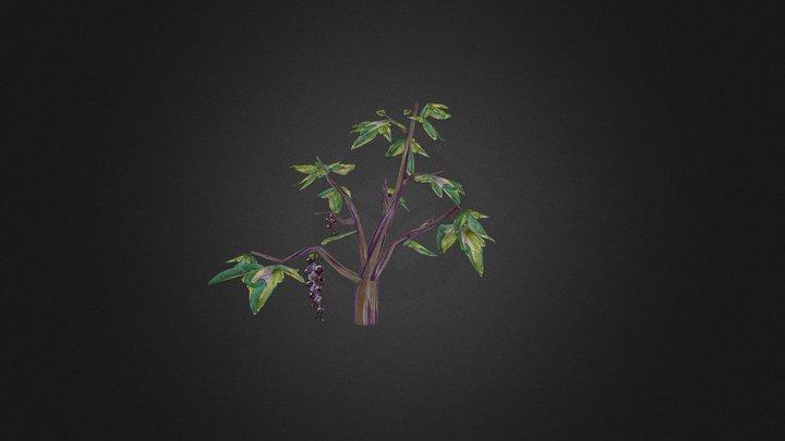 Currant bush 3D Model