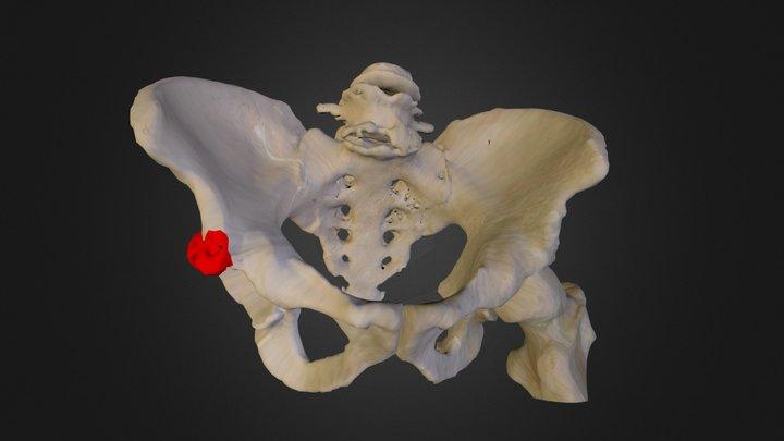 dubens 3D Model
