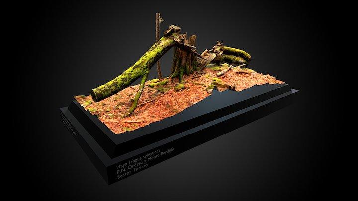 Haya muerta - P.N. Ordesa y Monte Perdido 3D Model