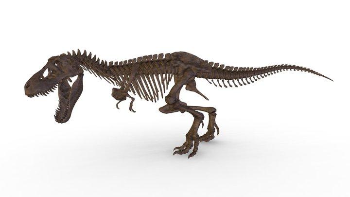 Tyrannosaurus skeleton 3D Model