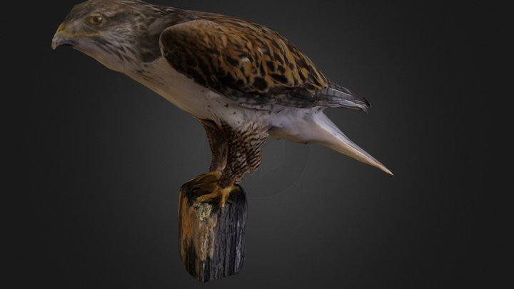 #3DST Red Tailed Hawk 3D Model