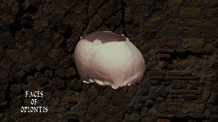 Oplontis B - Skull E 3D Model