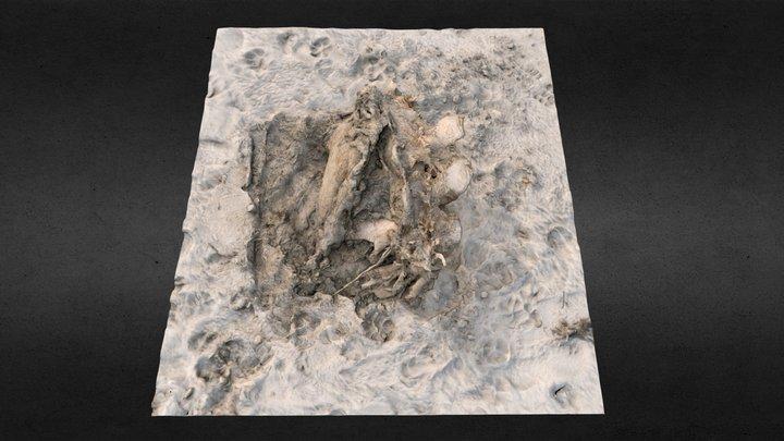 Whale carcass 3D Model