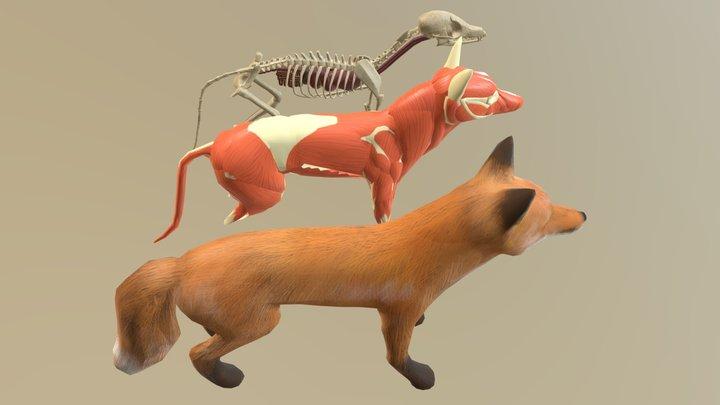 Fox Anatomy 3D Model