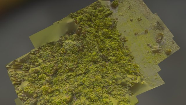 Aguajales-Quistococha-IQUITOS 3D Model