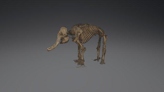 Asian Elephant 2 3D Model