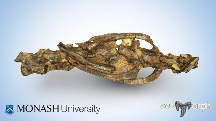 Australian fossil seal vertebrae (Phocidae) 3D Model