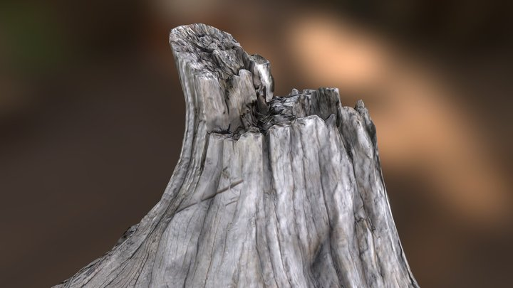 Gnarly Tree Stump: Photoscaned 3D Model