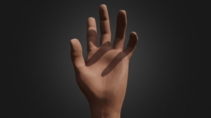 Hyper Detailed Rigged Hand 3D Model