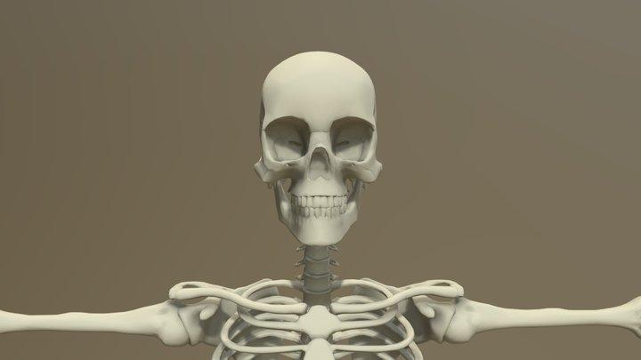 Skeleton Reference 8 Heads Male 3D Model