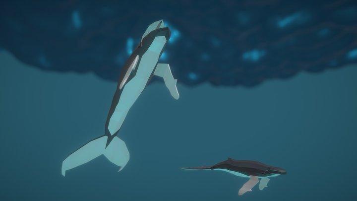 Humpback whales 3D Model