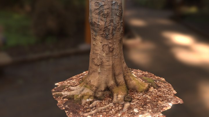 Free Tree Scan 3D Model