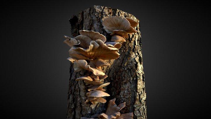 Oyster Mushroom / Fungi 3D Model