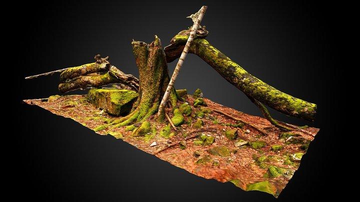 Dead beech (Fagus sylvatica) 3D Model