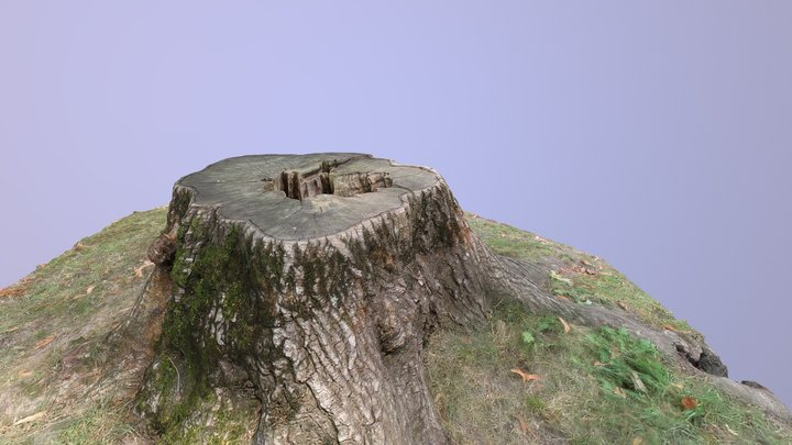 Tree Stump 2 3D Model