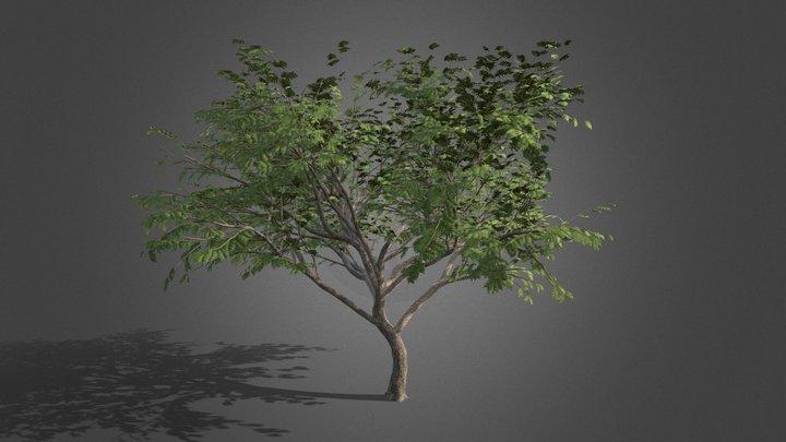 Hook Thorn Tree Medium Poly 3D Model