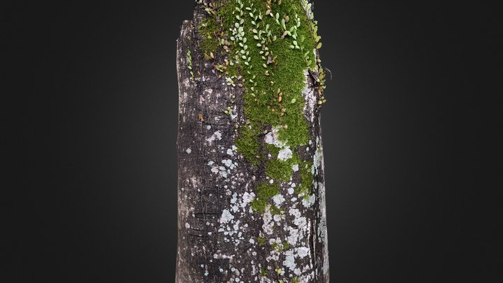 Mossy Tree Trunk (Close Up Partial Scan) 3D Model