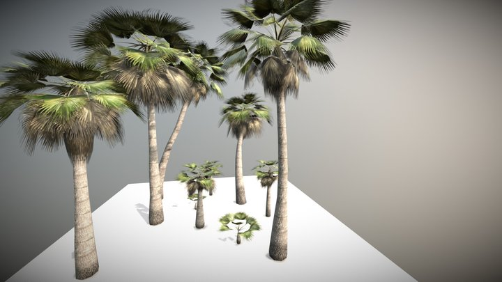 Low Poly Palms Pack 3D Model