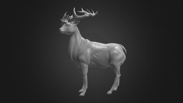 White Buck 3D Model