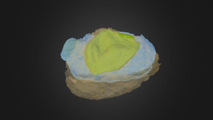 Pararaucaria collinsonae (Bract/Scale Complex) 3D Model