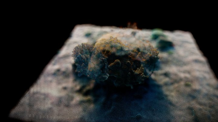 FIP Coral Sample: R&D 3D Cloud Points (RealTxt) 3D Model