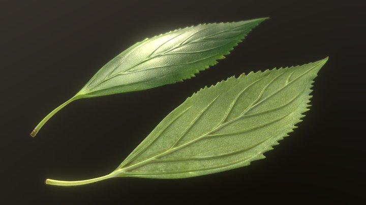 Forsythia Leaves - Forsythia x interm High-Poly 3D Model