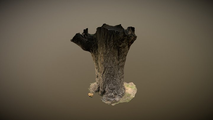 MarejTree - Photogrammetry 3D Model