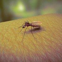 Mosquito | Vector of Disease 3D Model