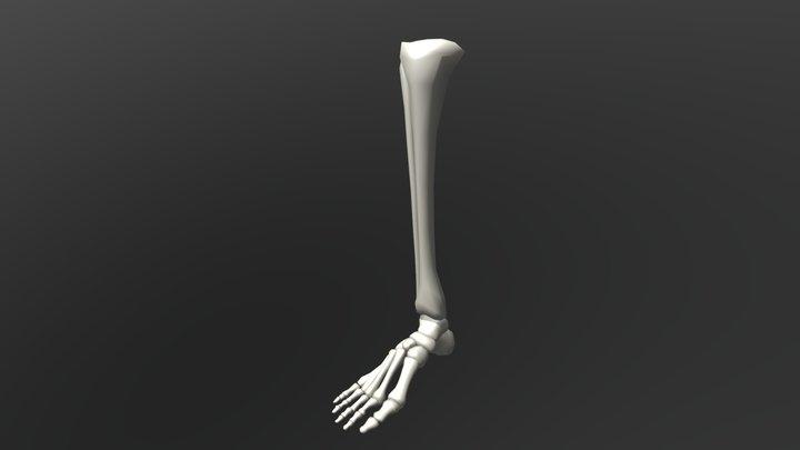 foot - test 3D Model